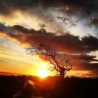 Sunset behind the angarrack bendy tree...
